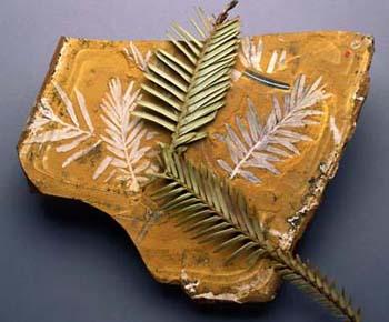 el fósil